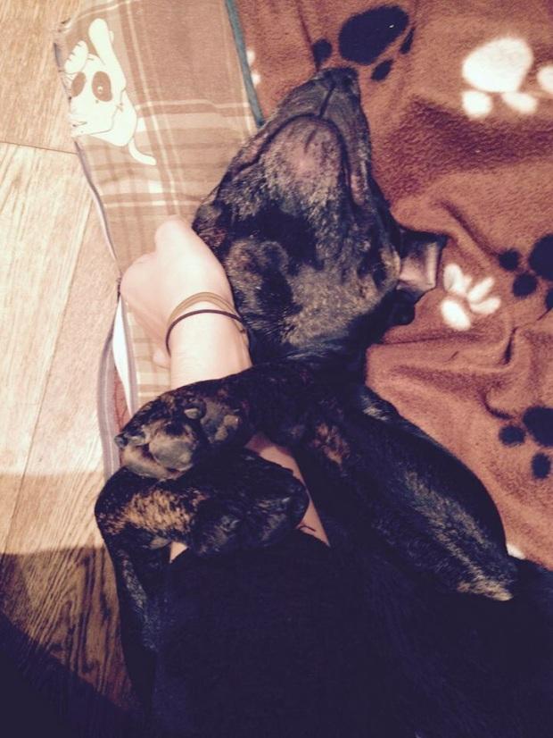 dog cuddling arm